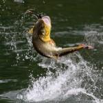 Какие затраты несет рыбак